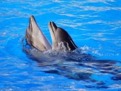 Дельфиний вальс