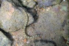Морские иглы