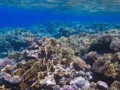 На коралловом рифе Эль Фанус