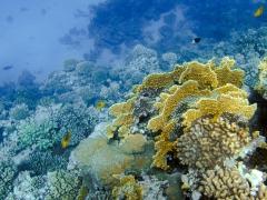На коралловом рифе в заливе Макади Бэй